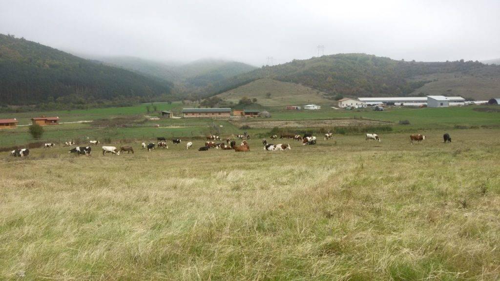 Био ферма