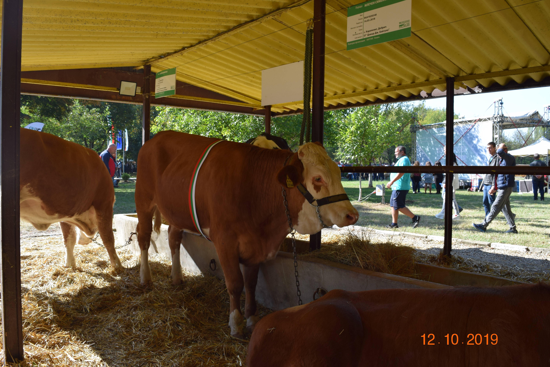 Националното животновъдно изложение край Сливен